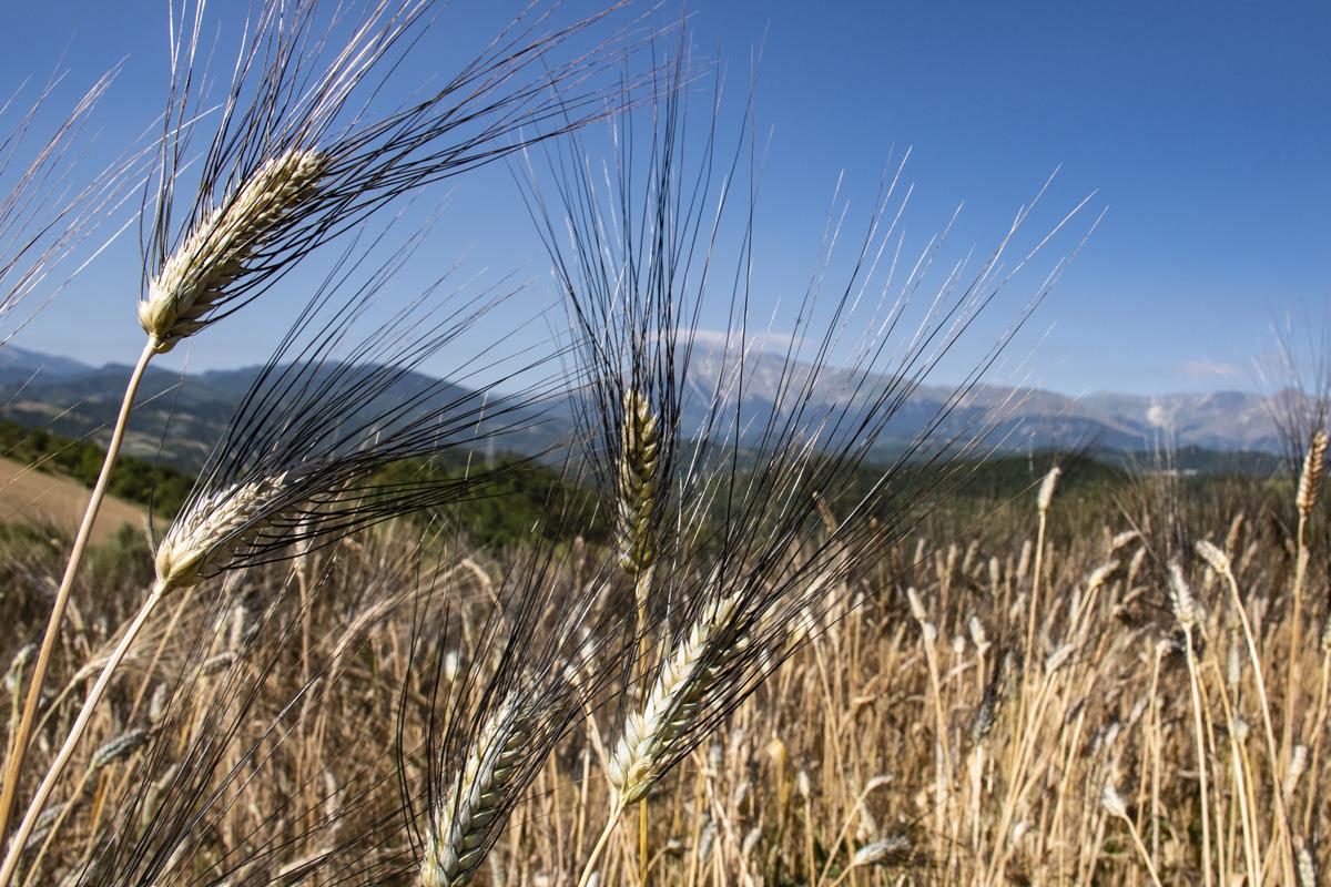 Terre Alte Picene - Prodotti da Agricoltura Simbiotica